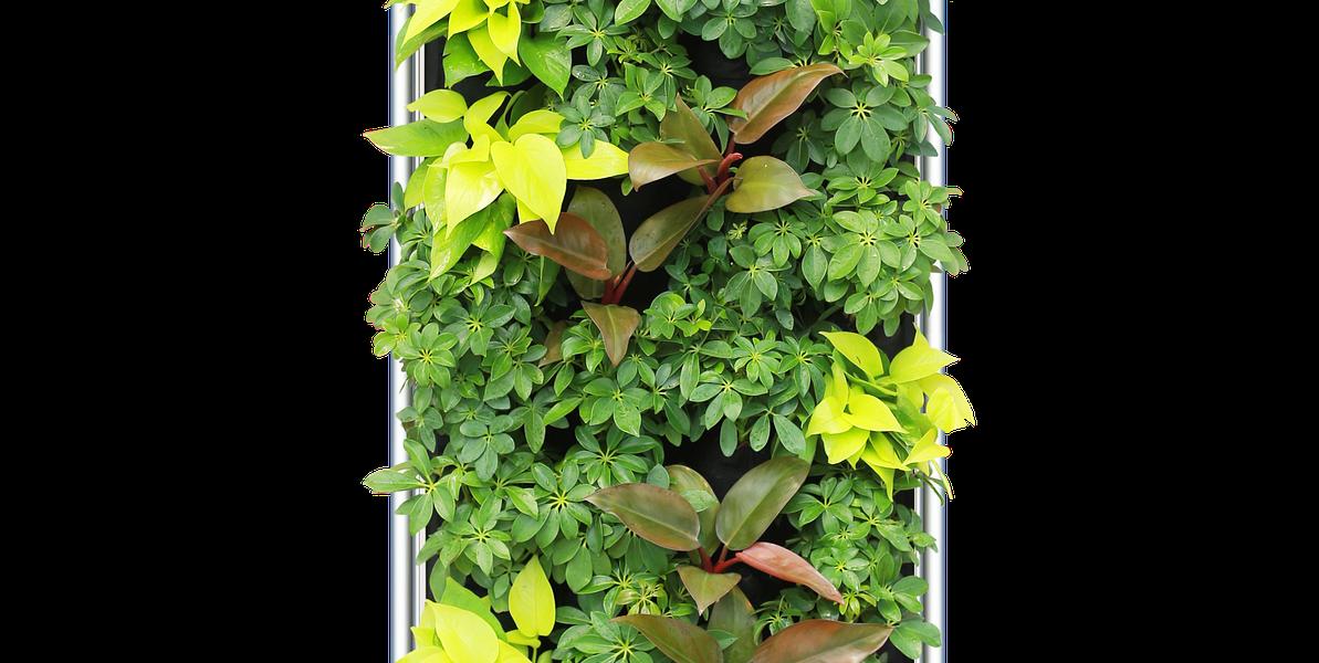 inne wydanie oczyszczacza powietrza. tym razem w wydaniu roślinnym