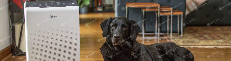Oczyszczacz Winix zero wraz z wylegującym się psem w salonie