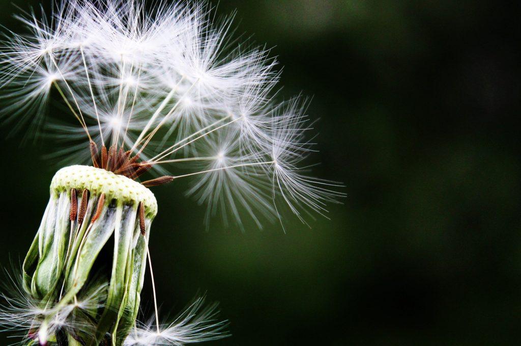 pomoc w walce z alergenami