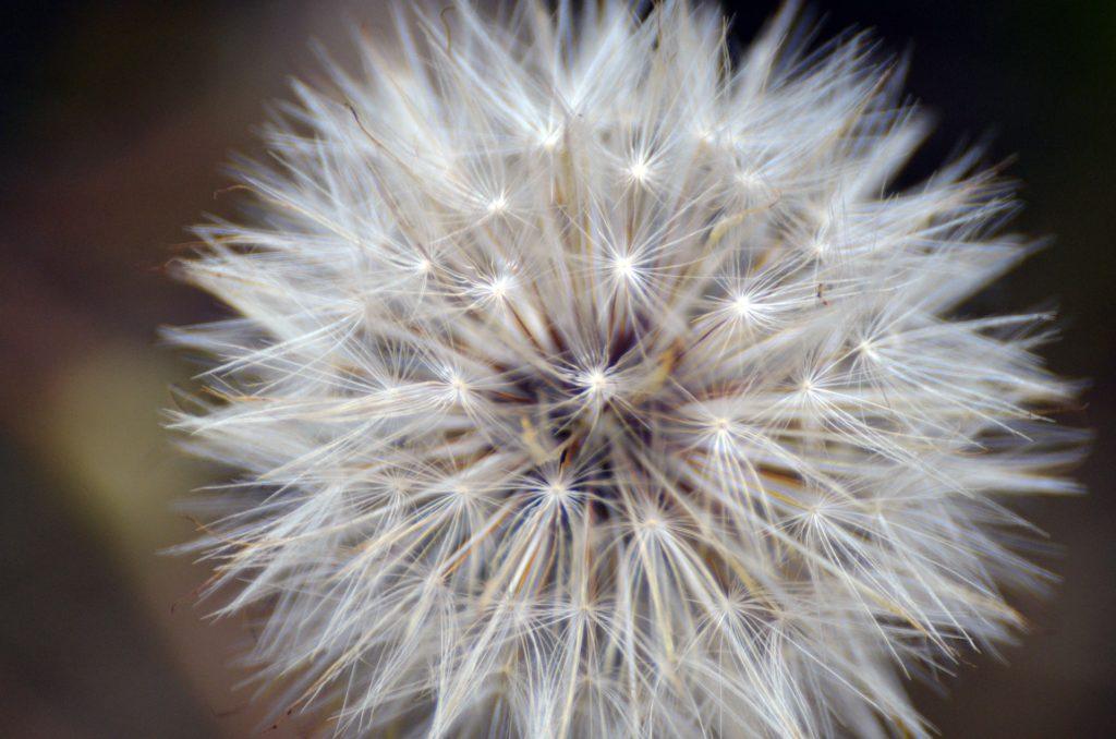 nasza odpowiedź na walkę z alergią